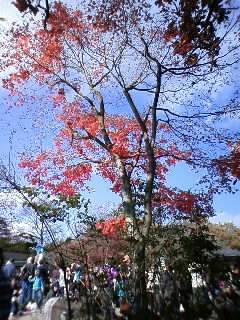 高尾山に来てます。